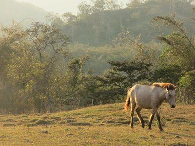 Temkessi cheval